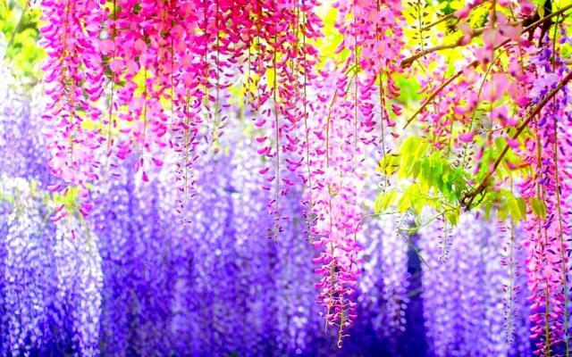 spring-flowers_0